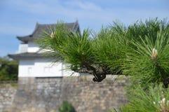 与大阪城堡的日本杉树在背景 库存照片