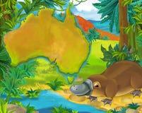 与大陆地图的动画片platypus 图库摄影