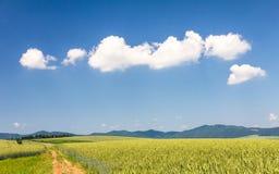 与大麦领域的国家风景 免版税库存图片