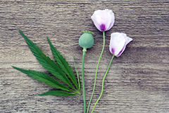 与大麻叶子和鸦片的构成 免版税图库摄影
