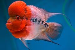与大头的鱼 免版税图库摄影