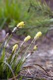 与大开花的草 库存照片