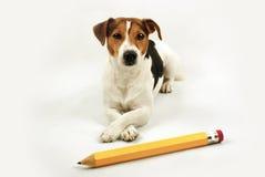 与大黄色铅笔的说谎的狗 免版税库存图片