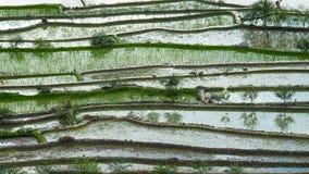 与天空反射的抽象米大阳台纹理 Banaue,菲律宾 免版税库存图片