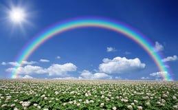 与天空和彩虹的土豆领域 免版税库存图片