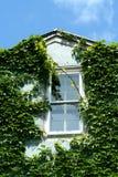与天空的常春藤覆盖的窗口 图库摄影