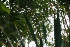 与天空的树 免版税图库摄影