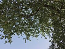 与天空的树 免版税库存图片
