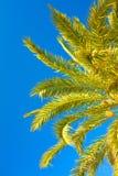 与天空的棕榈早午餐 免版税库存图片