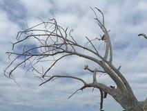 与天空的漂流木头树 库存图片