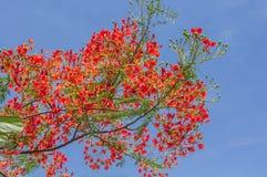 与天空的红色花 免版税库存图片