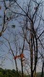 与天空的结构树 库存图片