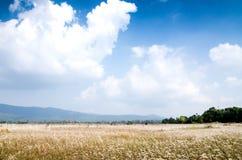 与天空的草风景 库存照片