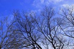 与天空的结构树 免版税库存照片