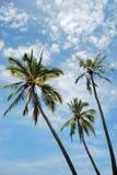 与天空背景的棕榈树 免版税库存照片