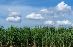 与天空蔚蓝和云彩的甘蔗领域在泰国 免版税库存图片