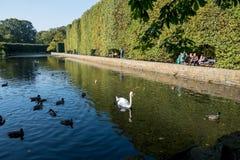 与天鹅的公园风景 免版税库存图片