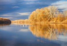 与天鹅的秋天风景 免版税库存图片
