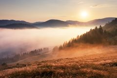 与太阳、草甸、森林和山的Landcape 免版税图库摄影