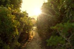 与太阳光宏指令的绿色灌木树 图库摄影