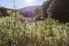 与太阳光晕的绿色灌木 库存照片