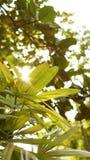 与太阳光的绿色背景 库存照片