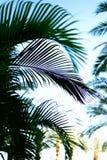 与太阳光线影响的棕榈分支 夏天、假日和旅行概念与拷贝空间 在掌上型计算机天空结构树的蓝色 图库摄影