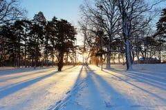 与太阳光芒的冬天树 免版税库存图片