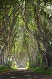 与太阳光芒的黑暗的树篱 免版税库存图片