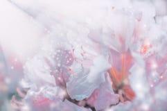 与太阳光芒的轻的花卉浪漫背景 免版税库存照片