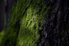 与太阳光芒的绿色生苔树干 免版税库存照片