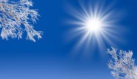 与太阳和多雪的结冰的树的冬天蓝天 免版税库存照片