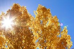 与太阳星的秋天白杨木 库存图片