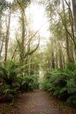 与太阳火光的大气雨林步行 库存图片