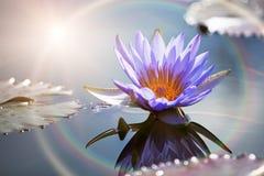 与太阳火光的莲花 免版税图库摄影