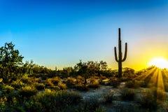 与太阳的日出通过灌木发出光线发光在亚利桑那沙漠 库存图片
