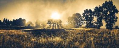 与太阳的有薄雾的早晨 库存图片