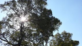 与太阳的树 库存照片