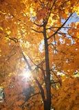 与太阳的美好的树枝在秋季森林里 免版税库存图片