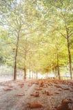 与太阳的落的秋叶在美丽的公园发出光线 库存图片