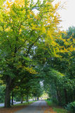 与太阳的落的秋叶在美丽的公园发出光线 免版税库存照片