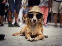 与太阳镜和草帽的滑稽的狗 免版税库存照片