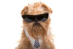 与太阳镜和领带的狗 免版税库存图片