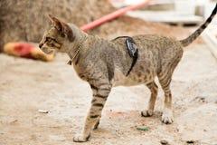 与太阳镜的猫和与一点响铃的装饰链子 库存照片