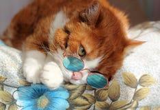 与太阳镜的猫 免版税库存照片