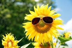 与太阳镜的滑稽的向日葵 免版税库存照片