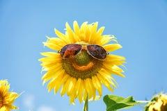 与太阳镜的滑稽的向日葵 免版税图库摄影