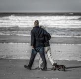 与夫妇的忠诚的达克斯猎犬,走在海滩 库存照片