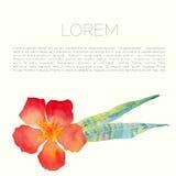 与夹竹桃叶子和花的传染媒介抽象水彩背景 皇族释放例证