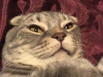 与奇怪的情感面孔的猫 免版税库存图片
